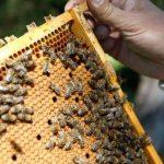 Loisirs insolites à aborder cette année, de l'apiculture au baseball  - Parler espagnol